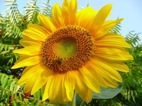 Žlutá charakteristika barvy