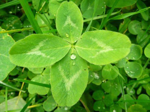Zelená barva štěstí