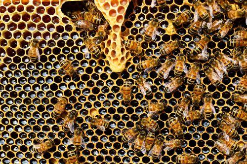 včely a včelí produkty