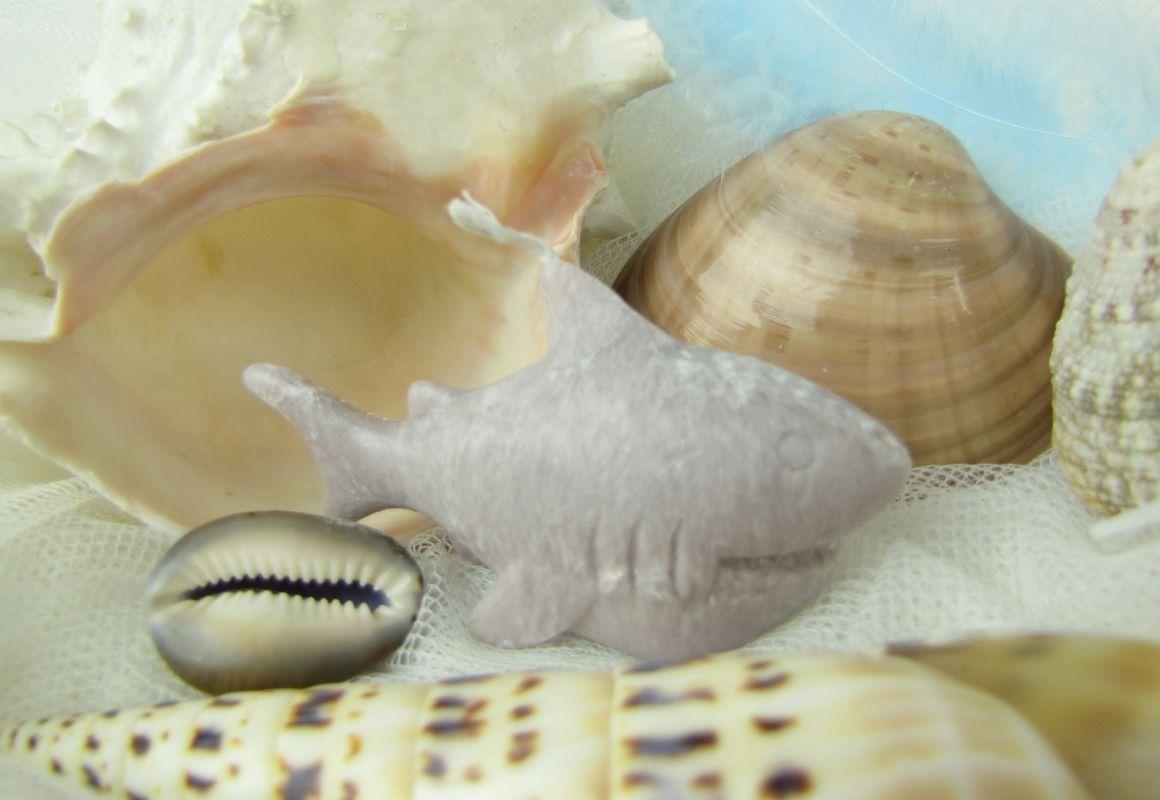 Svíčka žralok šedý