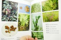 Léčivé rostliny třetího tisíciletí