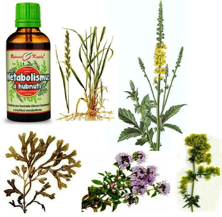 Metabolismus a hubnutí bylinky s chaluhou