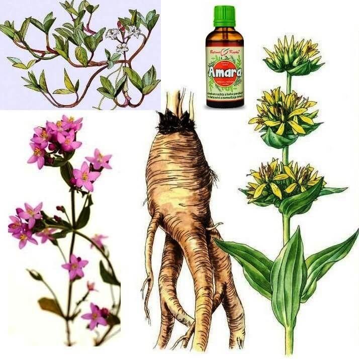 Amara bylinné kapky na žaludek