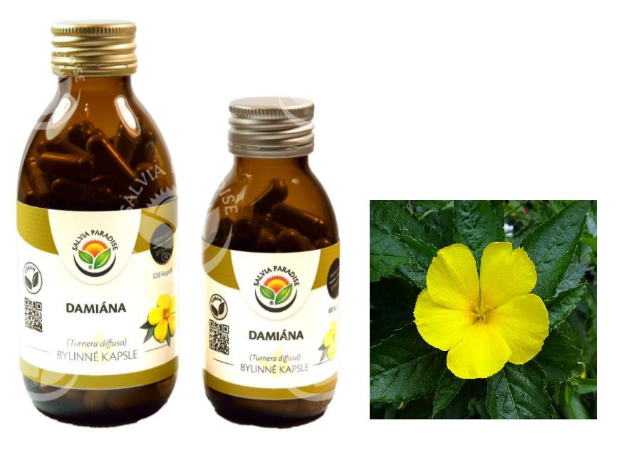 Damiana - rostlinné afrodisiakum