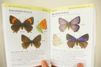 MOTÝLI Encyklopedie do kapsy